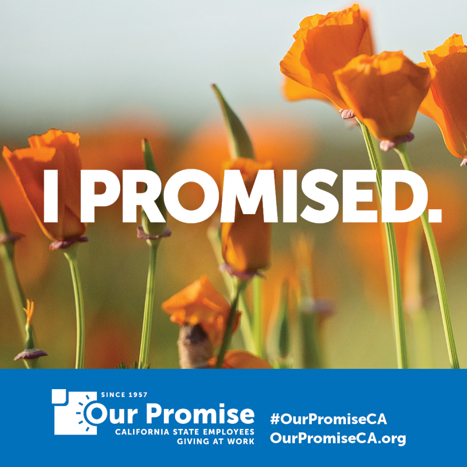 """I Promised""  poppies"